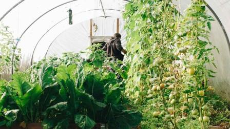 Man inside green house