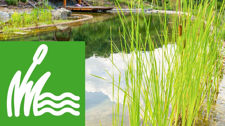Green living – from natural pools to swimming ponds