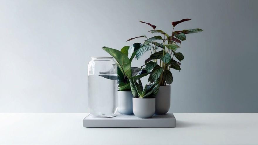 Pikaplants selbstbewässerndes Tableau für pflegeleichte Zimmerpflanzen