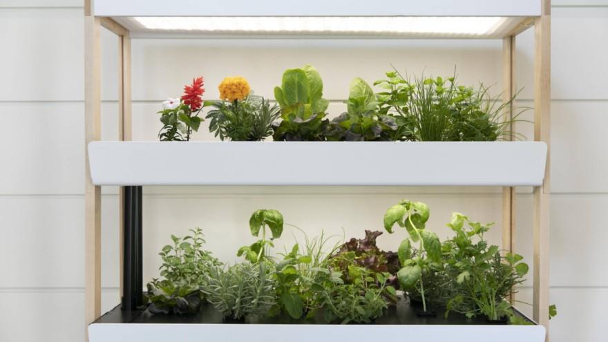Indoor Gardening mit dem hydroponischen System von Rise Gardens