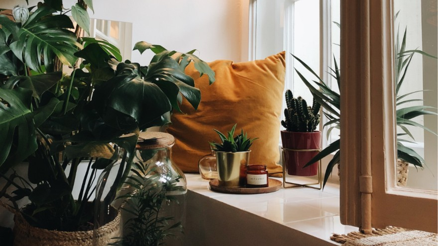 Create the Urban Jungle with indoor plants