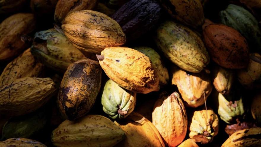 Kakaobohnen ©tonyschocolonely