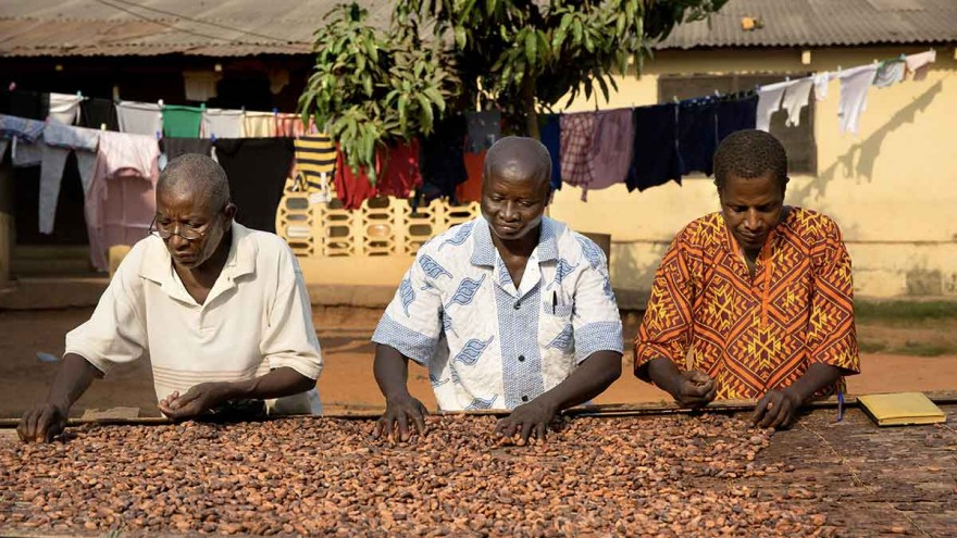 Cocoa drying ©tonyschocolonely