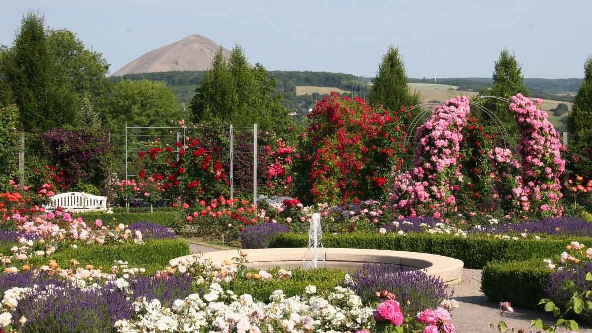 Europe Rose Garden Sangerhausen – Photo: Rosenstadt Sangerhausen GmbH/Karin Thom 2
