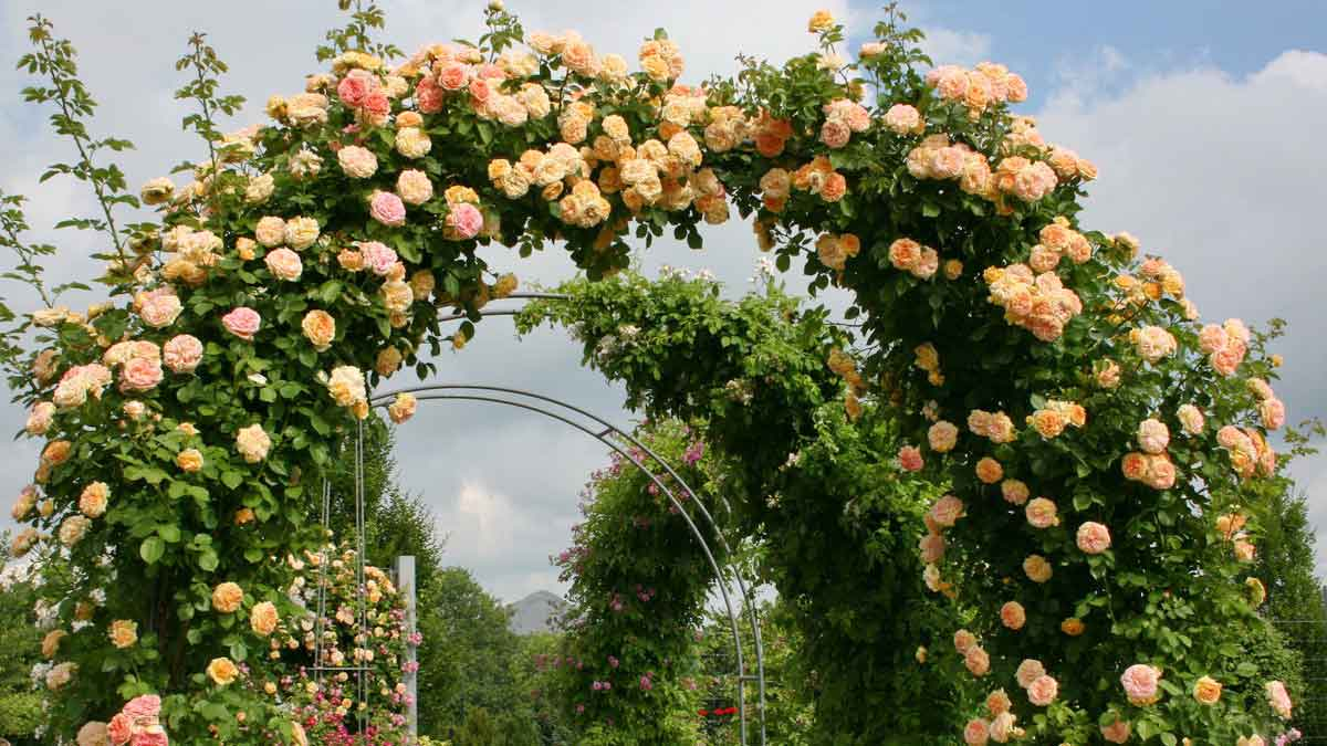 The largest collection of roses in the world