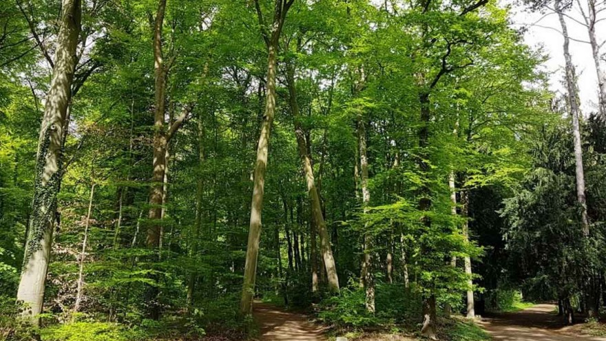 Was viele nicht wissen: Auch in Europa ist der Bedarf an Neupflanzungen von Bäumen immens. – Foto: R. Moers
