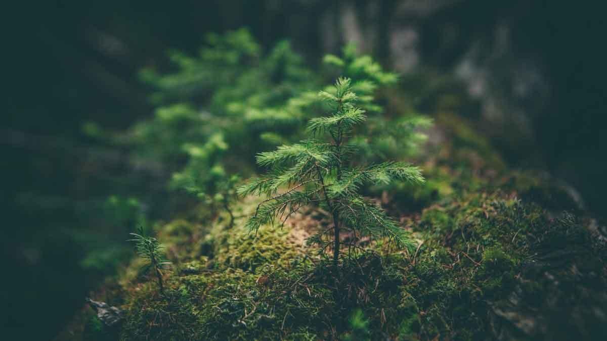 Der Startschuss für die gemeinsamen Baumpflanzaktionen fiel beim BHB-Kongress.