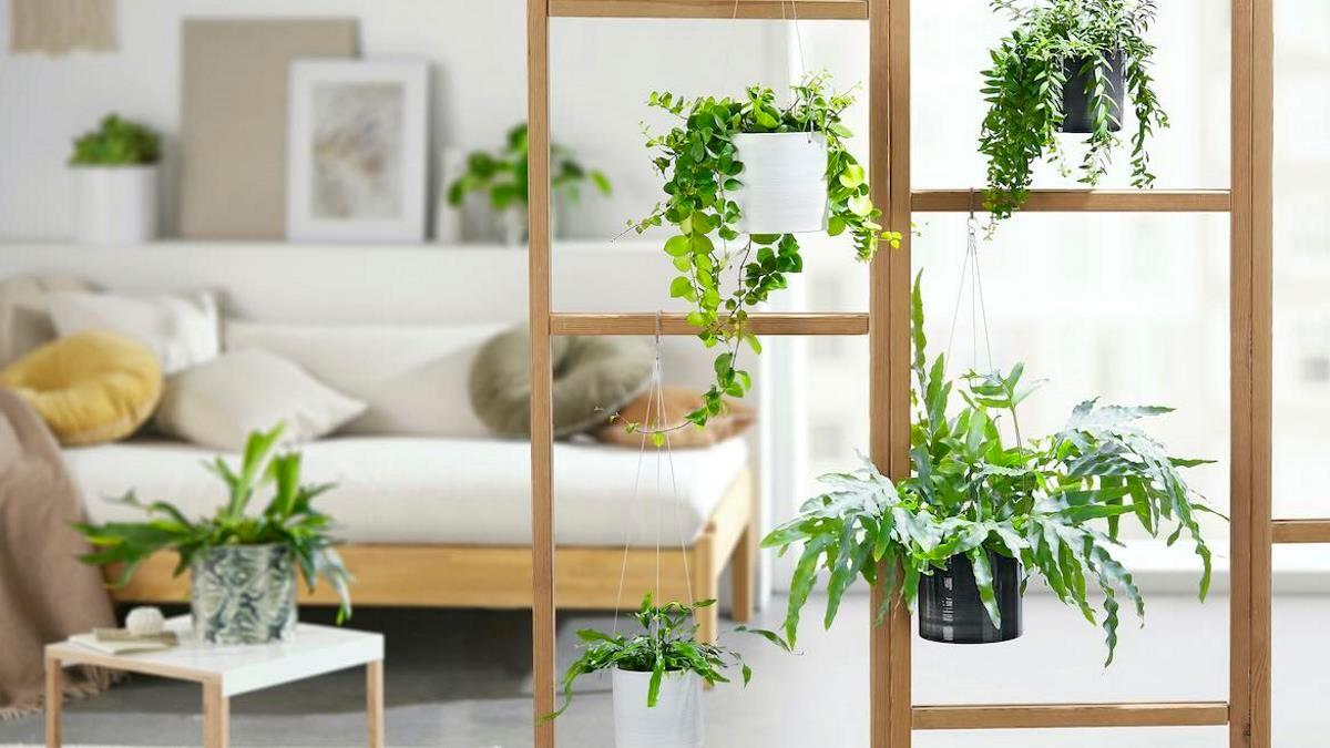 Green room divider © Scheurich
