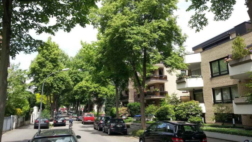Trees in cities contribute in a variety of ways to making life in the city more pleasant and attractive. – Photo: DGS
