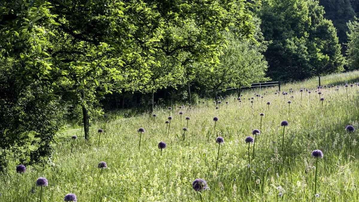 A walk through Roland Doschka's garden is a unique journey of discovery. – Photo: Luckner