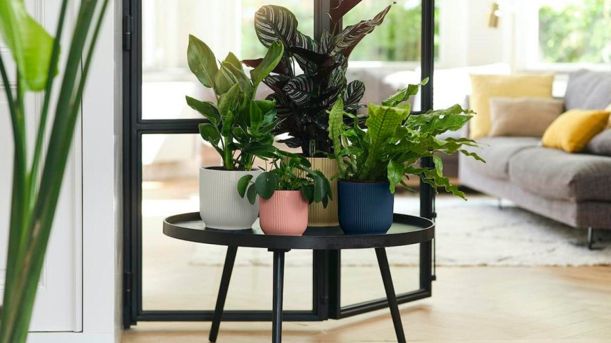 New plant pot collection made from 100 percent recycled plastic: Vibes from elho © elho