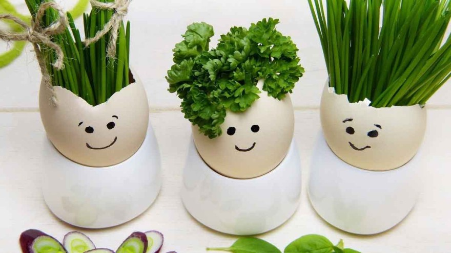 It doesn't always have to be tulips: Even fresh herbs make a good Easter decoration. – Photo: silviarita/pixabay