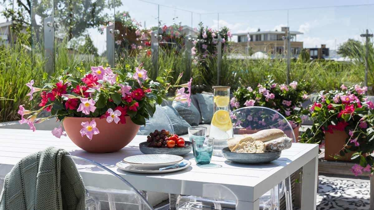 Viele werden in diesem Jahr ihren Urlaub zuhause verbringen. Daher sind die Themen Balkon, Terrasse und Garten sehr wichtig. – Foto: Syngenta Flowers