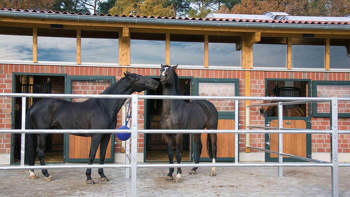 Wohlfühlen statt wegsperren - Die Zukunft der Pferdehaltung