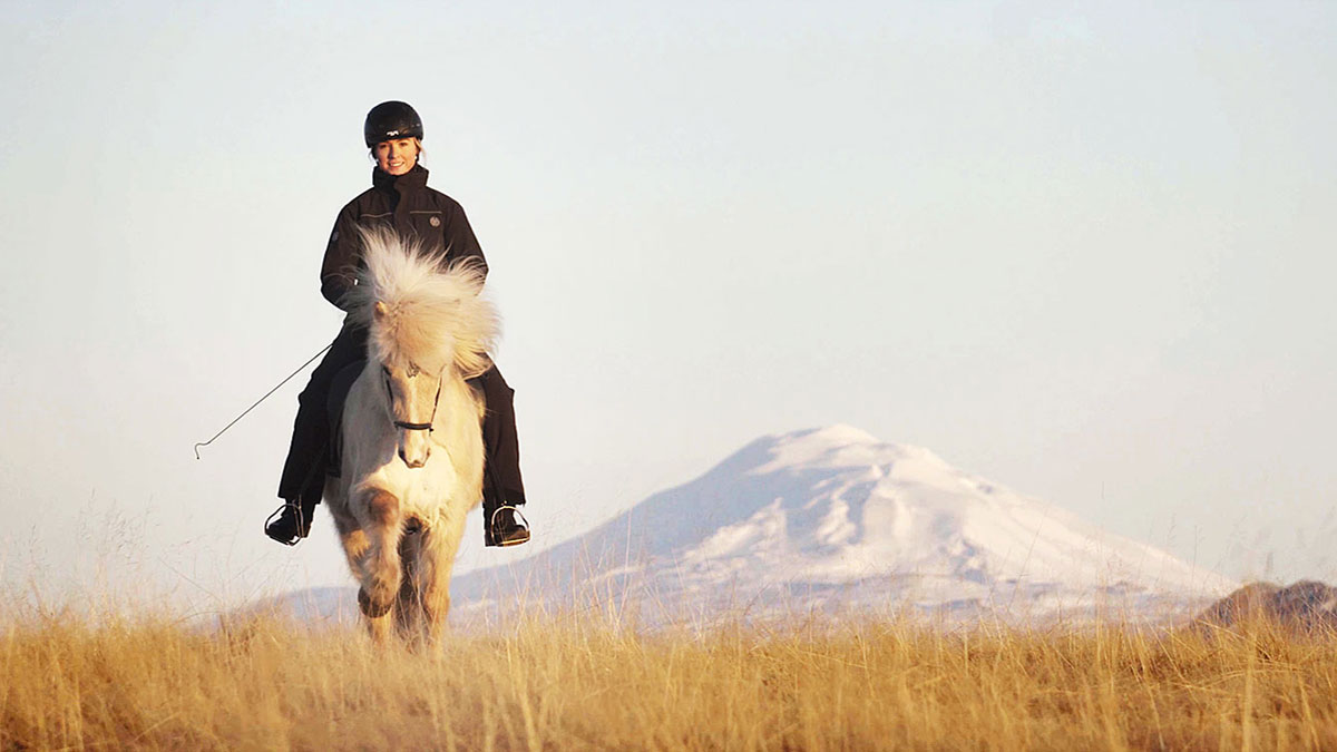 Icelandic horses: Five gaits and many opportunities