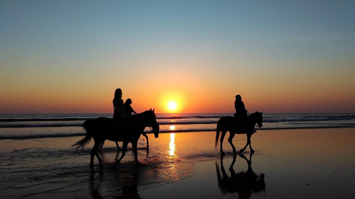 Der spoga horse Ländercheck (5): Die Pferdebranche in Dänemark