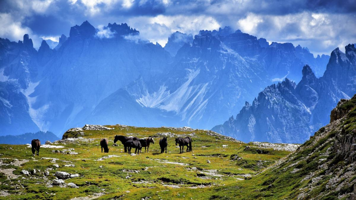 Der spoga horse Ländercheck (3): Die Pferdebranche in Italien