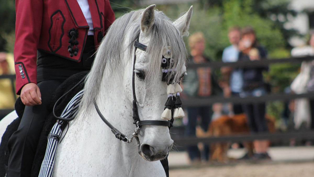 The spoga horse country check (6): The horse industry in Spain
