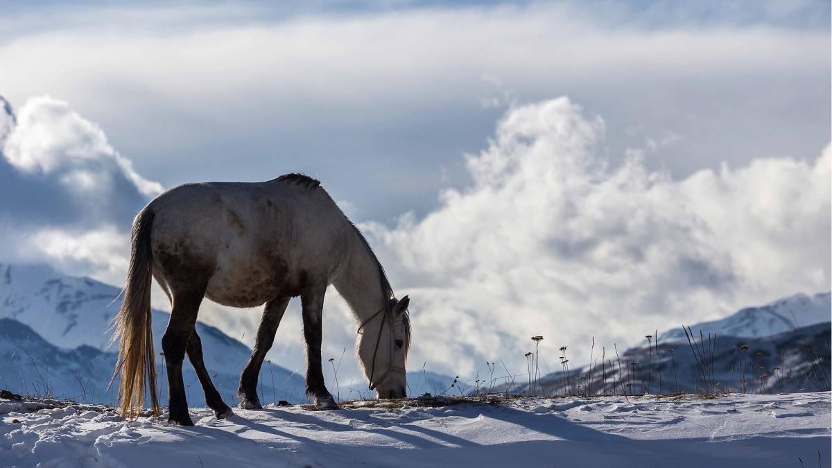 The spoga horse country check (4): The horse industry in the Czech Republic