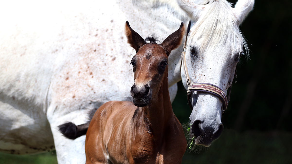 The future market potential of the Germany equestrian industry